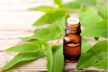 bigstock-eucalyptus-essential-oil-and-f-239529784